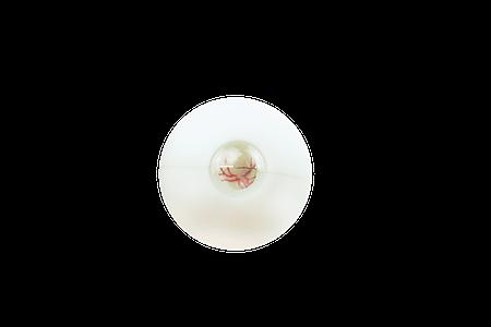 mts vacuum holder, eyecre.at, mts, the wetlab company, porcine eye, human eye, animal eye,eyelabinnovations, escrs, wetlab, operation, simulation, Eye 4 Cypass, Eye 4 Foreign Bodies / Dropped nucleus, Eye 4 Iris, Eye 4 Vit / Ilm, Eye 4 Vit / Cat, Eye 4 Cataract, Eye 4 Intravitreal Injection, Eye 4 Aphakia, Eye 4 Rehxis , Eye 4 Glaucoma, Eye 4 Biometrics, mts,